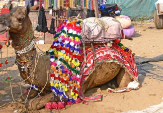 Rajasthan with Camel Fair