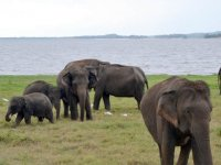 Sri Lanka: Ancient Kingdoms, Nature and Wildlife