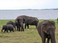 Sri Lanka: Ancient Kingdoms, Nature and Wildlife