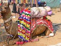 Rajasthan with Camel Fair