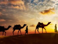 Rajasthan:Tigers, Forts and Sand Dunes